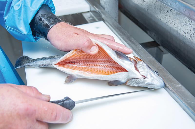 Fish Farm Production Capacity